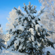 Stock Photo: Magical winter woods covered with fresh