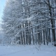 Magical winter woods covered with fresh — Stockfoto #1732293