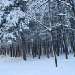 Magical winter woods covered with fresh - Stock Photo