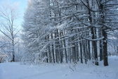 Magical winter woods covered with fresh — Stock Photo