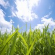 Beautiful Grassland with Blue sky — Stock Photo
