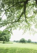 Beautiful Grassland with Blue sky — Stock Photo