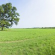 Beautiful Grassland with Blue sky — Stock Photo #1340092