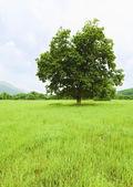 Hermosas praderas con cielo azul — Foto de Stock