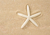 Star Fish in sand and sea — Stock Photo