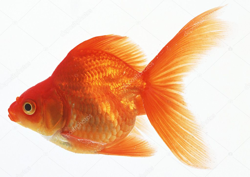 Аквариум для Вас от кампании Золотая рыбка Аквариумы на