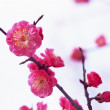 Flowers and Plants of Spring — Stock Photo