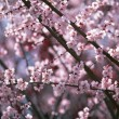 Flowers and Plants of Spring — Stockfoto