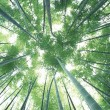 Green Bamboo Forest — Stock Photo #1376687