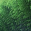 Stock Photo: Green Bamboo Forest