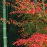 Fall or Winter Season — Stock Photo