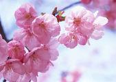 Flores y plantas de la primavera — Foto de Stock