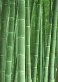 Bosque de bambú verde — Foto de Stock