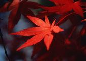 Temporada de otoño o invierno — Foto de Stock