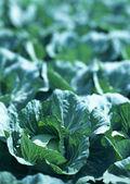 Comer verduras frescas saludables — Foto de Stock