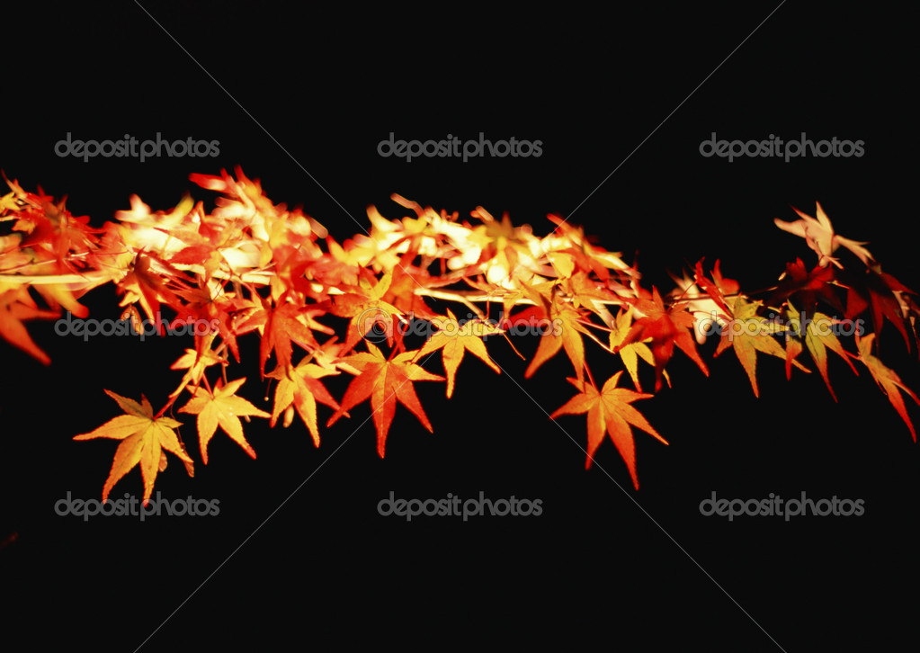 Fall or Winter Season — Stock Photo #1376858