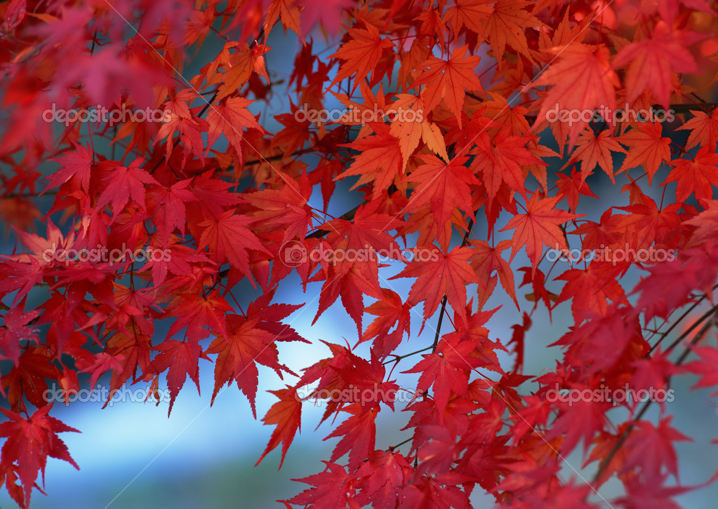 Fall or Winter Season — Stock Photo #1376870