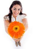 High angle view of woman showing flower — Stock Photo