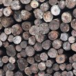 Logs — Stock Photo #1523512