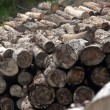 Logs — Stock Photo #1523534