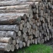 Logs — Stock Photo #1523645
