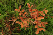 Orange Colored plant — Stock Photo