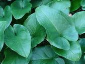 Green leafs — Stock Photo