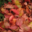 Foto Stock: Autumn Leafs