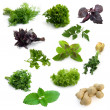 Aromatic herbs - Stock Photo