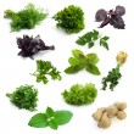 Aromatic herbs — Stock Photo