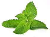Fresh mint branch on a white background — Stock Photo