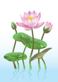 Pink lotus flower — Stock Vector