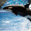Killer Whale — Stock Photo #1331864