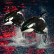 Stock Photo: Killer Whales