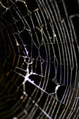 Glowing Cobweb — Stock Photo