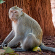 Stock Photo: Monkey in jungle