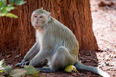 Monkey in jungle — Stock Photo