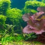 Tropical aquarium — Stock Photo #1332953