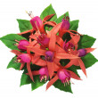 Stock Photo: Fuchsia