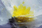 Flover in ice — Stock Photo