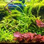 Tropical aquarium — Stock Photo #1341256