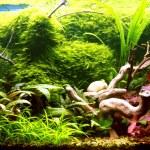 Tropical aquarium — Stock Photo #1343269