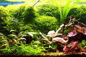 Tropical aquarium — Stock Photo