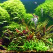 Stock Photo: Decorative aquarium