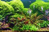 Decorative aquarium — Stock Photo