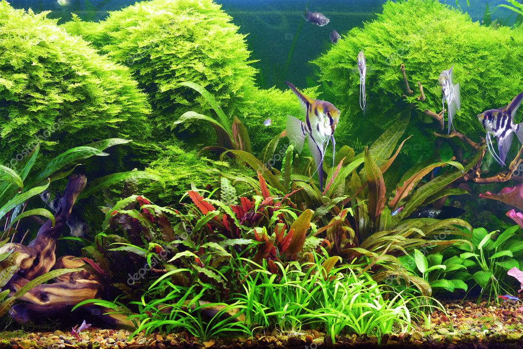 Decorative aquarium  Stock Photo #1373595
