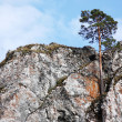 Lonely pine — Stock Photo #1417478