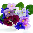 Bouquet of violets on a white background — Stock Photo