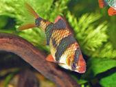 Akwarium — Zdjęcie stockowe