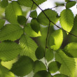 Foliage — Stock Photo #1441702